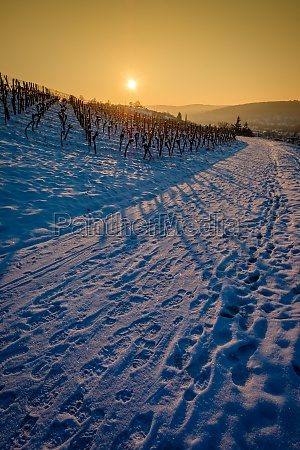 road with winter snow in vineyard