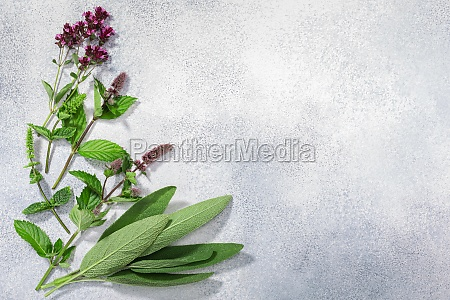fresh medicinal herbs sage mint oregano