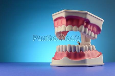 dental tooth display