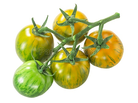 green zebra heirloom tomatoes on the