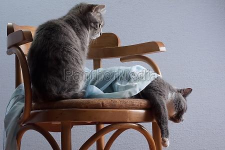 cat nurse takes care of lying