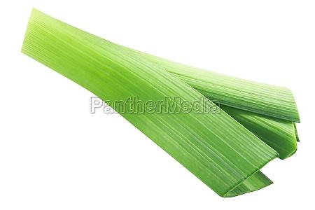 leek spring green onion stem isolated
