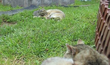 gray cats sleep next to each