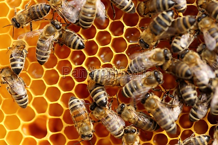 bees get honey bees work on