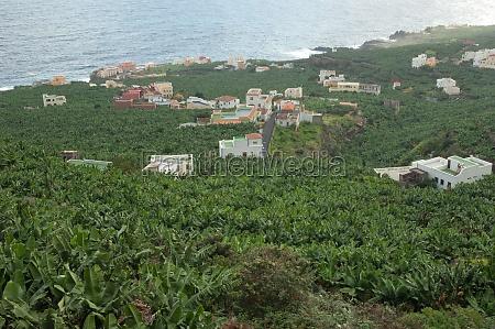 banana plantation along the coast