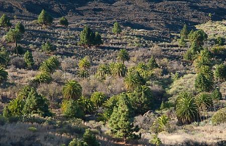 tamanca protected landscape