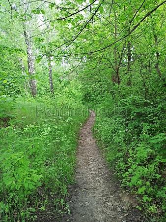 walkway in the spring wood beautiful