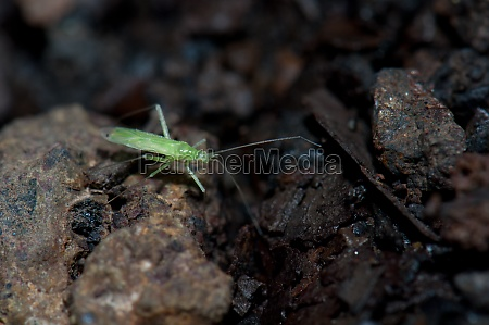 bug on the forest floor