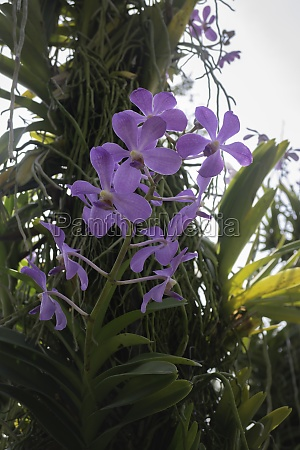 colorful orchid farm cafe and agricultural