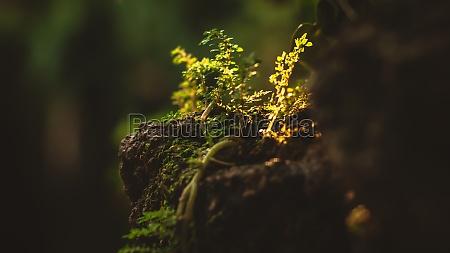moist green moss growing near a