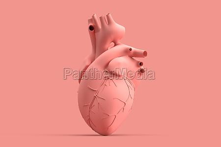 minimalistic illustration of human heart on