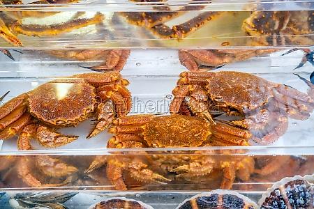 red king crab taraba crab or