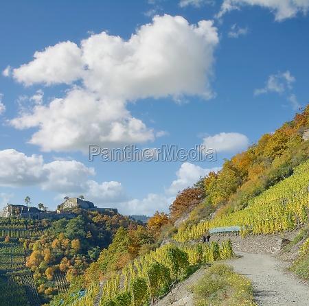 red wine hiking trail ahrtal rhineland
