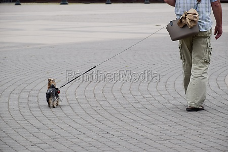 an elderly man leads small dog