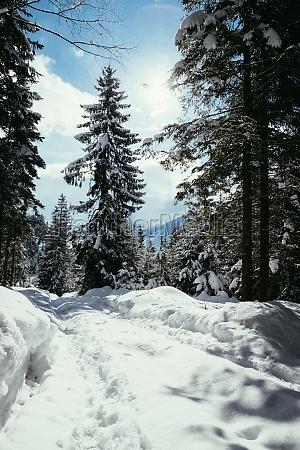 sunny winter landscape in the nature