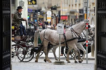 fiaker pferde in wien OEsterreich europa