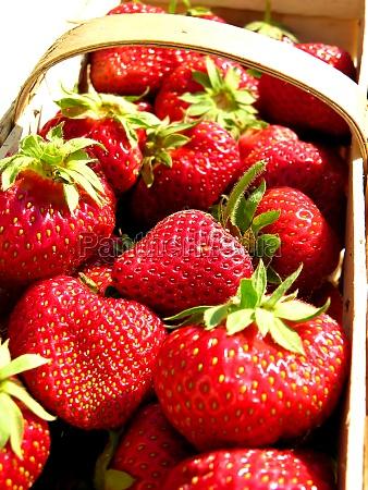 fresh strawberries in a chip basket