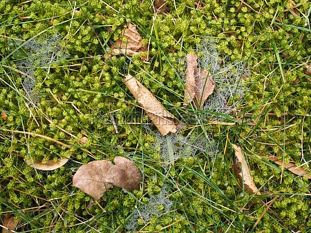 moss autumn leaves morning dew