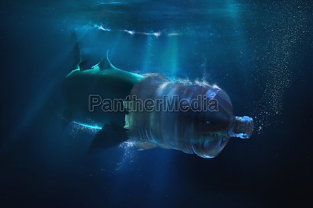 shark with face trapped in plastic