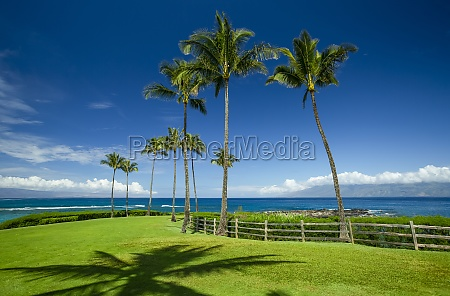 palm trees and lush green grass