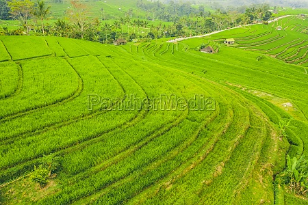 drone view of the bali rice