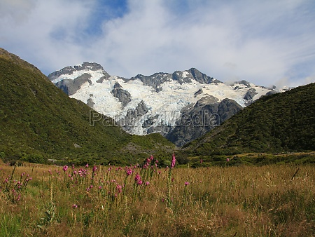 pink wildflowers glacier and high mountains