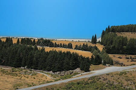 forest meadow and road at the