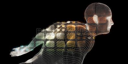 human body digital