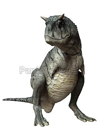 3d rendering carnotaurus sastrei dinosur on