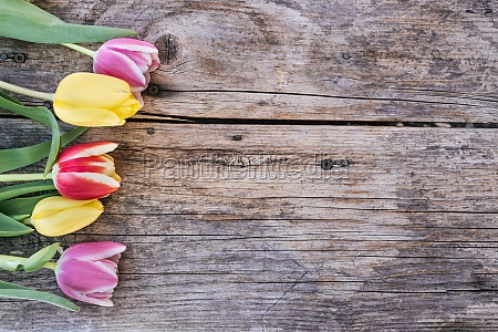 arrangement of colorful tulips on a
