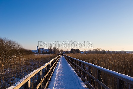 reed landscape of the federsee and
