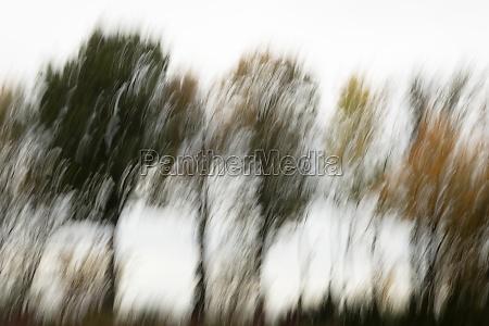 motion blurred foliage