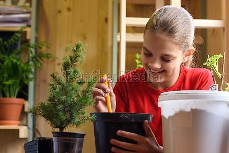 happy girl transplants a spruce seedling