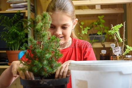 a girl is planting a spruce