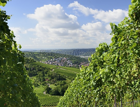 hilly landscape stuttgart