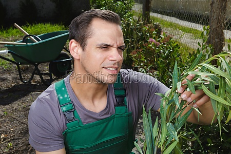 male gardener looking at plants