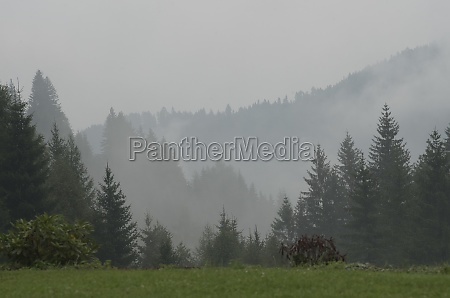autumn fog in natural landscape