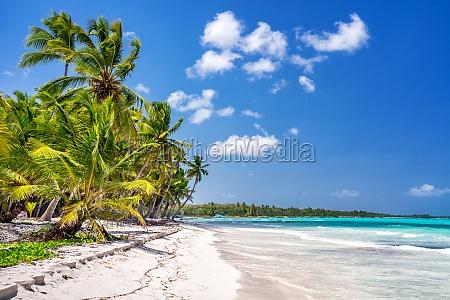 sunny tropical beach in dominican republic