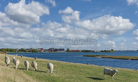 lemkenhafen fehmarn baltic sea schleswig holstein