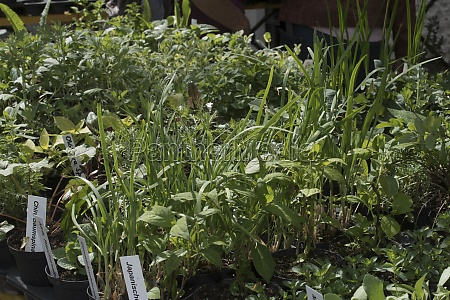 green plants and herbs in a