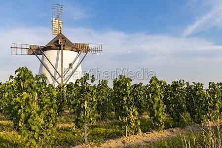 vineyard near windmill retz lower austria