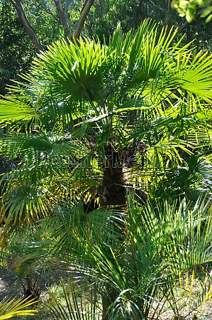 small palm tree in a garden