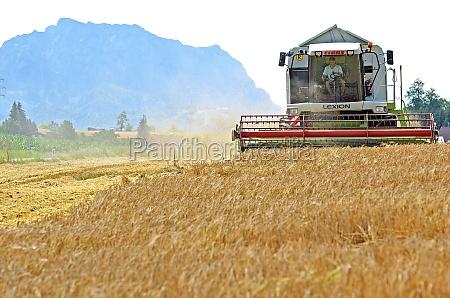 maehdrescher auf getreidefeld im salzkammergut oberoesterreich