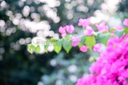 flower bush background image with glare