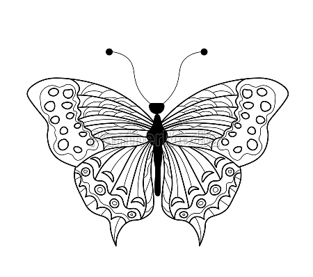 butterfly coloring book linear drawing of