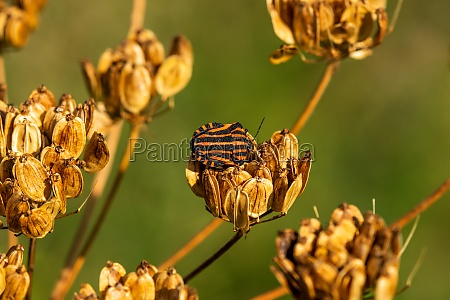 the forest bug sitting on the