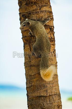 pattaya beach cute squirrel thailand