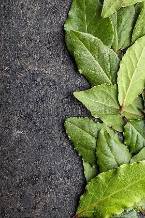 fresh green bay leaves