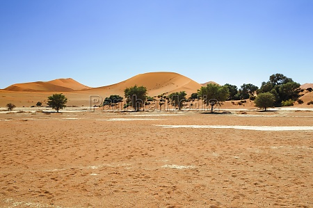 dunes with acacia trees in the