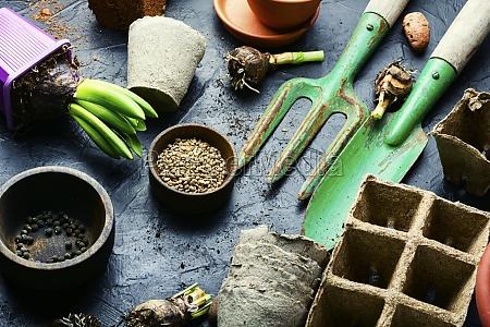 seedling of spring flowers and gardening
